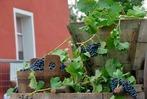 Fotos: Das Weinfest in Wolfenweiler