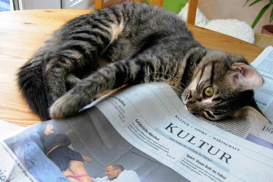 Das Kätzchen Lilly hat eine Vorliebe für Kultur. (Foto: Heike Uhl, Friesenheim-Schuttern)
