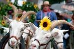 Fotos: Umzug beim Kippenheimer Dorffest