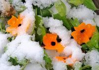 Kältefront erreicht Südbaden – Schnee im Schwarzwald