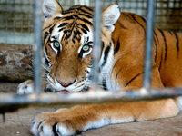 Tierschutzbeauftragte macht sich für Zirkustiere stark