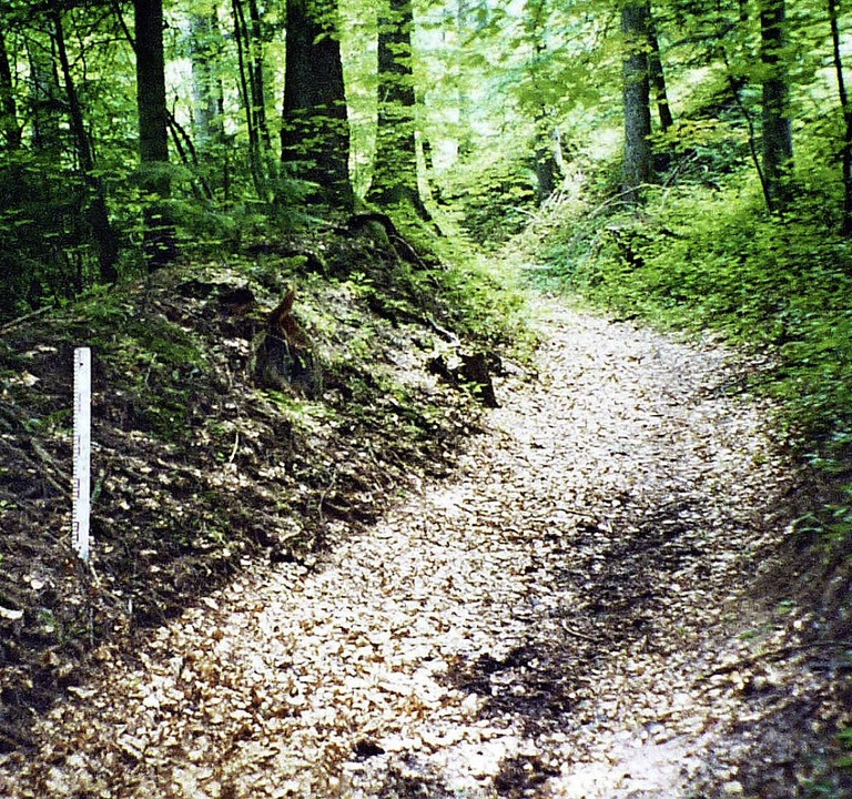 Den alten Zustand (links) werde die Ex... der  Forstweg (rechts) entlangführt.   | Foto: Privat