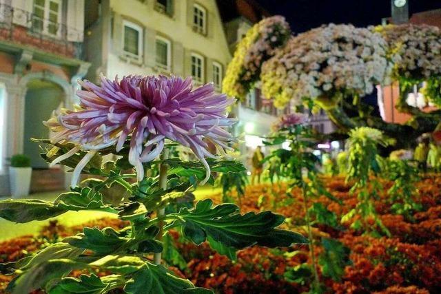 Fotos: Chrysanthema 2013 in Lahr
