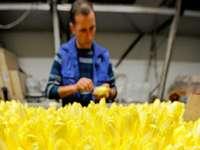 Bohrerhof will unabh�ngig von Subventionen wirtschaften