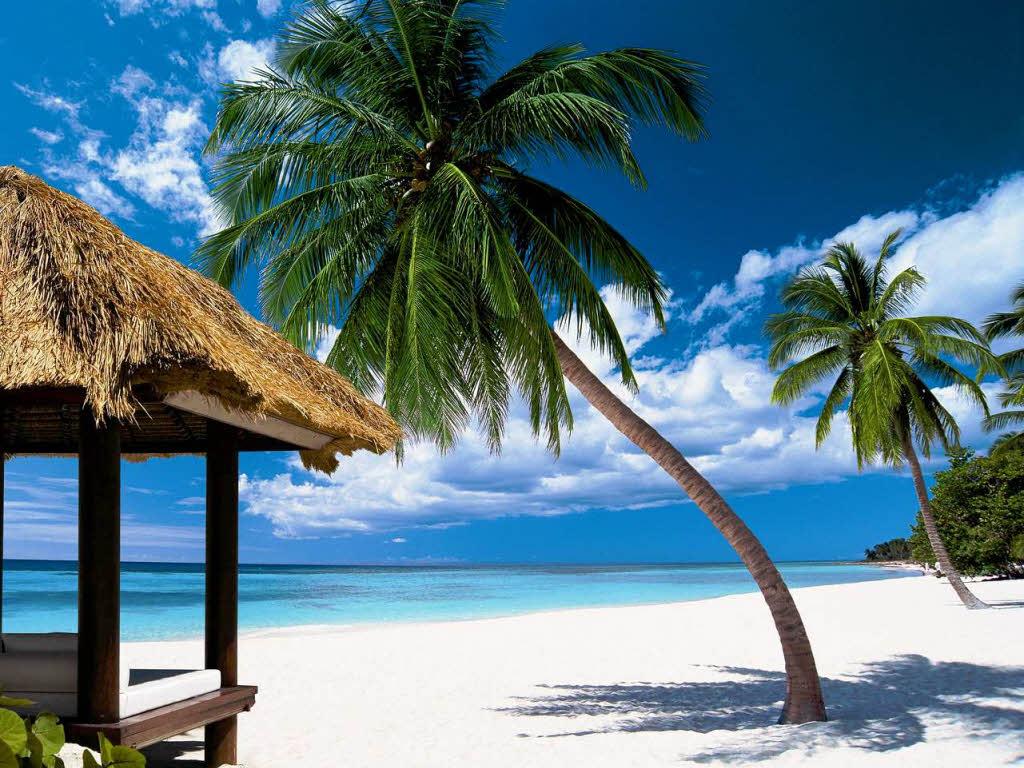 Bildergebnis für palme strand sonne