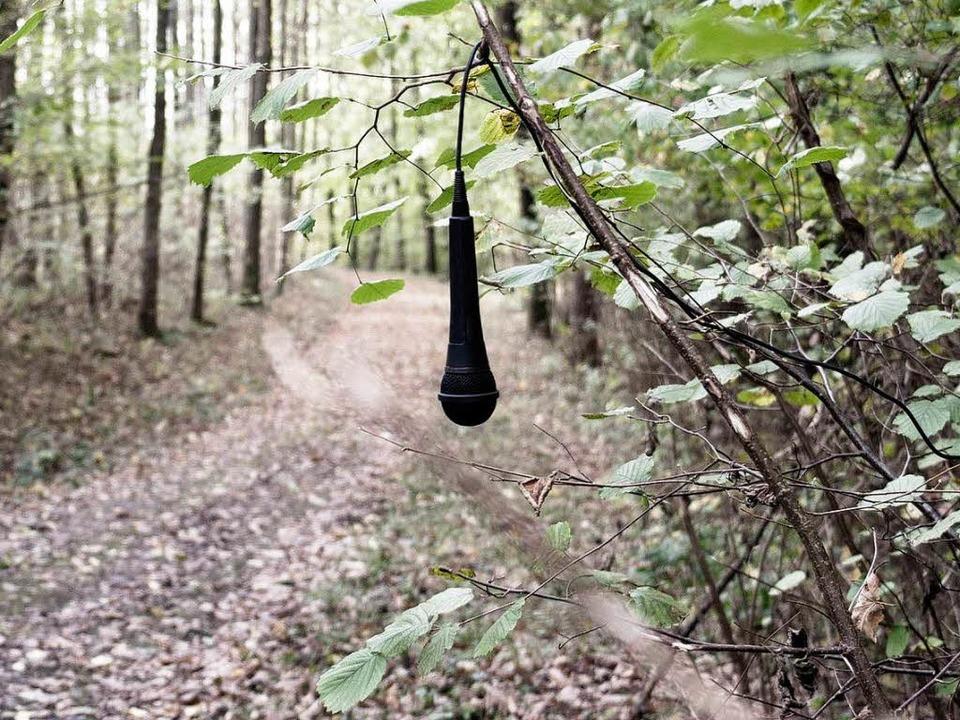Aus Protest gegen die NSA hat Florian Mehnert Mikrofone im Wald aufgehängt.    Foto: Florian Mehnert
