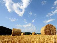 Klimawandel trifft Landwirte am Bodensee – EU-Projekt soll helfen