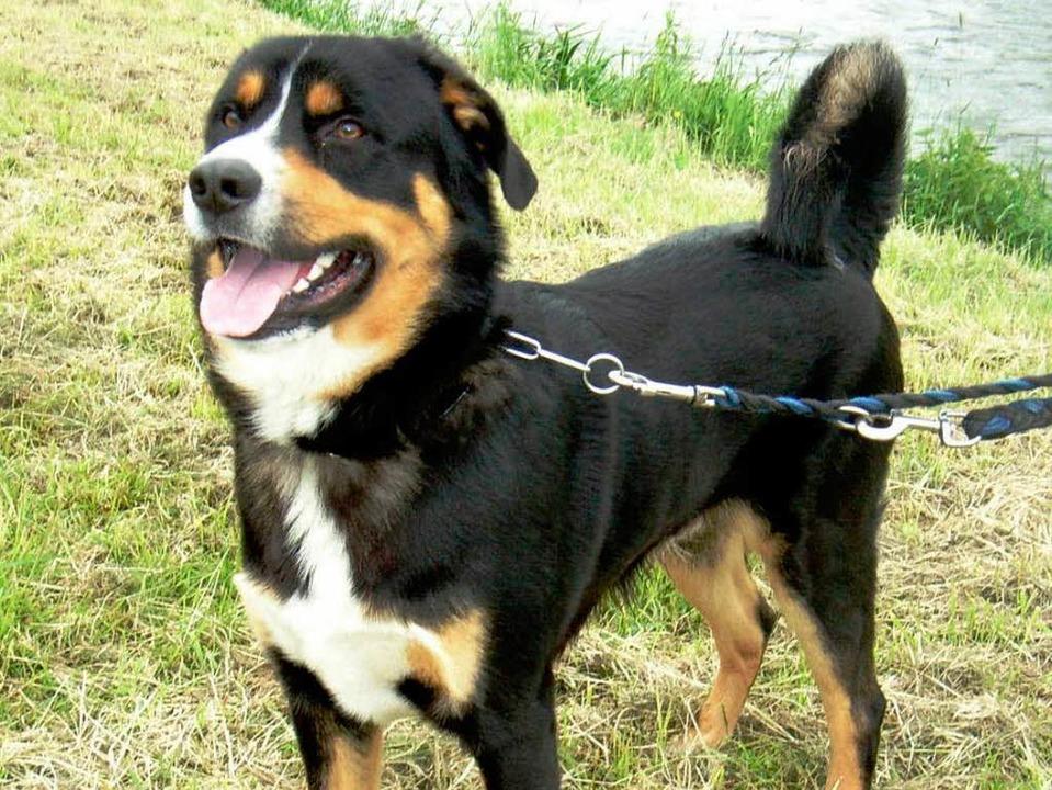 Rund um den Gifizsee sollten Hunde derzeit nur angeleint unterwegs sein.    Foto: Tierheim Emmendingen