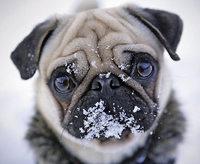 BADISCHE-ZEITUNG.DE: Tiere Im Schnee