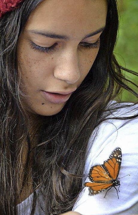Zutraulich: die Monarchfalter  | Foto: Sandra Weiss
