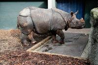 Fotos: Wenn das Nashorn im Zoo Basel auf die Waage steigt