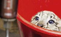 """""""Weight watching"""" im Zoo"""