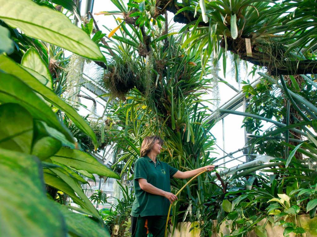 bildung wissen flora wachsen pflanzen schneller durch mehr kohlendioxid badische. Black Bedroom Furniture Sets. Home Design Ideas