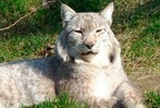Fotos: Schwarzwaldzoo Waldkirch hat mehr als 200 Tiere