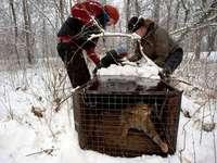 Forscher: Die Wildkatze ist zurück in Südbaden