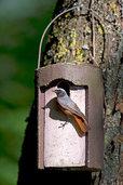 Ein Zuhause für Vögel und Fledermäuse