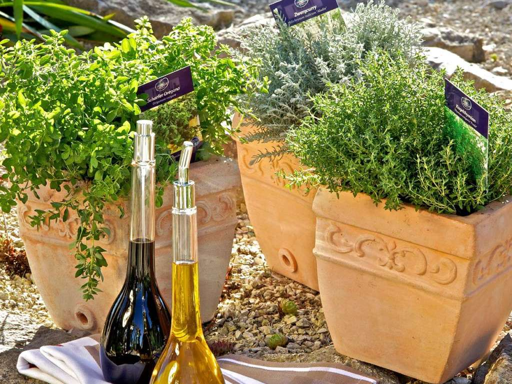 kübelpflanzen und kräuter schaffen mediterranes flair - balkon, Gartengerate ideen