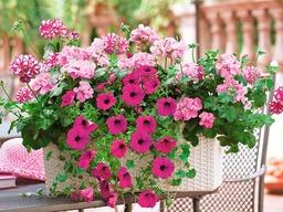 So wird der Balkon zu einem Blumenmeer