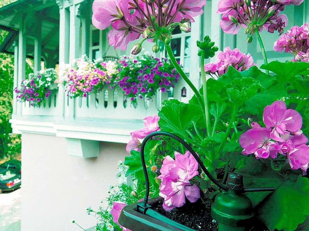 balkon wenig gie en anzeige tipps f r die richtige bew sserung badische. Black Bedroom Furniture Sets. Home Design Ideas