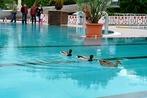 Bötzingen: Das runderneuerte Freibad hat geöffnet