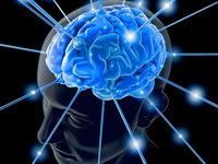 Wissenschaftler und K�nstler erforschen das Gehirn