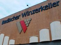 Der Badische Winzerkeller erh�ht das Traubengeld