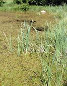 Das Biotop am H�ttenhofweg: Die Enten vor der Glash�tte
