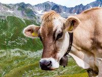 Schweizer entscheiden �ber noch st�rkere Eind�mmung der Migration