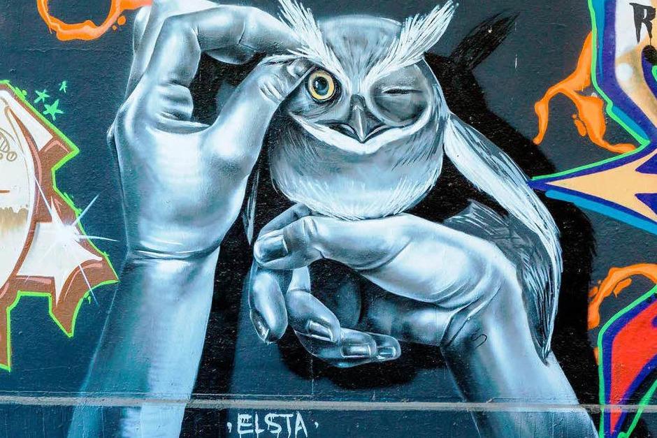Graffiti an der Dreisam in Freiburg (Foto: Carlotta Huber)