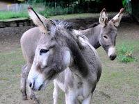 Zwei neue Bewohner im Schwarzwaldzoo Waldkirch
