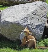 Parc du Petit Prince: Ein neuer Freizeitpark im Elsass