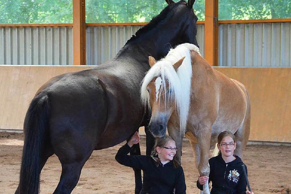 Die Welt der Pferde war zu Gast auf dem Bellihof in Ebnet. (Foto: Juliane Kühnemund)
