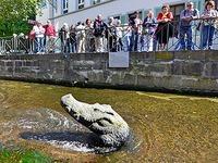 Unbekannte haben Freiburgs Krokodil den Kopf verdreht