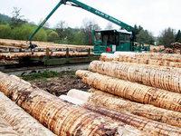 Umstrittene Forstreform: Wie wird der Holzverkauf künftig geregelt?