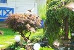 BZ-Fotosommer (4): W�hlen Sie den sch�nsten Garten
