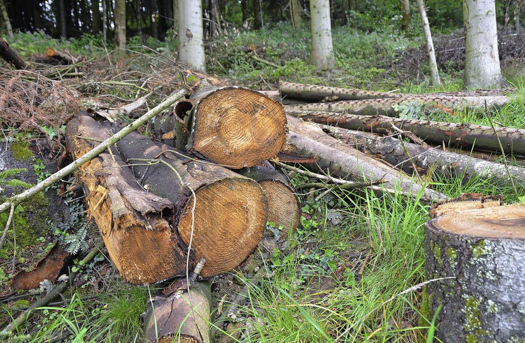 Holz bleibt lange liegen nasser boden erlaubt keinen for Boden liegen