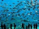 Das gr��te Aquarium der Welt