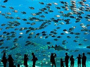 Ocean Kingdom: Das gr��te Aquarium der Welt