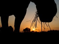 Haben Tiersch�tzer Fressk�rbe von Pferden zerschnitten?