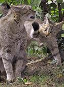 Nachwuchs im Kleinbasler Tierpark Lange Erlen v