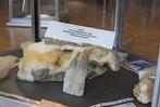 Fotos: Die Mineraliensammlung in Eisenbach
