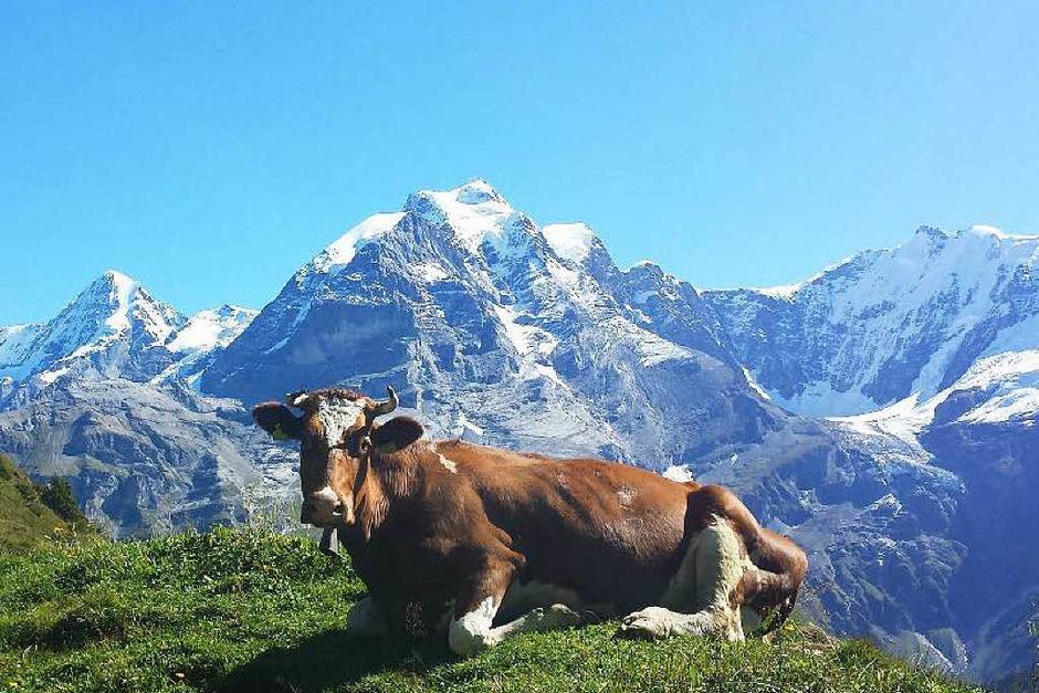 Berner Oberland, Schweiz (Foto: Heribert Schmidt)