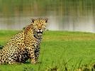 Pantanal - wo der Jaguar zuhause ist