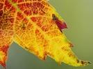 Der Herbstanfang steht bevor
