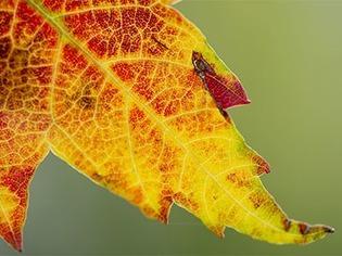 Der Herbstanfang steht bevor - wie wird das Wetter?
