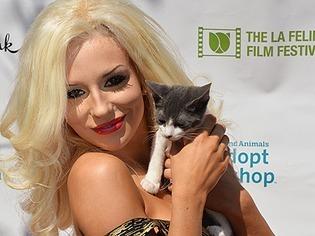 Miau: Tierische Filmstars in Los Angeles beim Katzenfilmfestival
