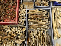 Experten untersuchen Grabfunde vom M�nsterplatz