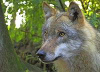 """""""Und wenn der Wolf kommt?"""" im Waldhaus Freiburg"""