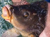 Fische gequ�lt: Strafbefehle gegen zwei Personen erlassen