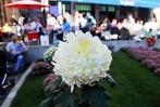 Fotos: Die Chrysanthema am Sonntag